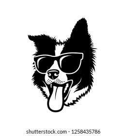 Border Collie dog wearing sunglasses - isolated vector illustration - Vector