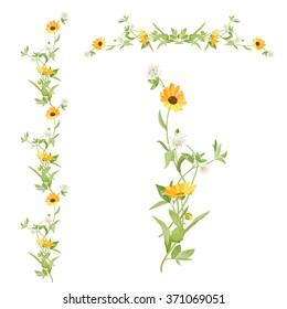 Border of flowers calendula clover