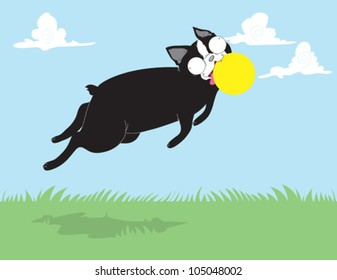 Boston Terrier Catching Ball