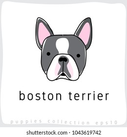 Boston Terrier : Dog Breed Collection : Vector Illustration