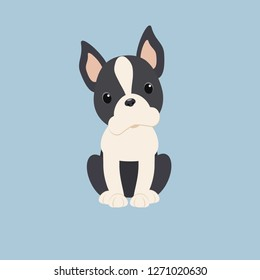 Boston Terrier dog breed vector. Doodle nice doggie pet vector.