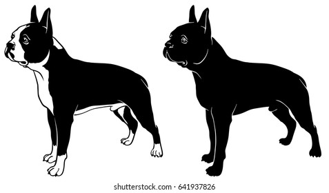 Boston terrier set outline and silhouette vector