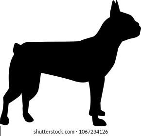 Boston terrier silhouette real in black