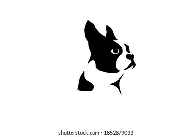 Boston terrier silhouette real in black. Boston terrier Isolated vector illustration silhouette breed dog dog show use on banners business cards postcards icon advertising black on white run stand spo