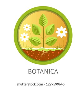 Botanica school discipline, informational lessons about nature and floral vector. Chamomile flowers, leaves growing from ground. Education about natural resources and plants botanics examination