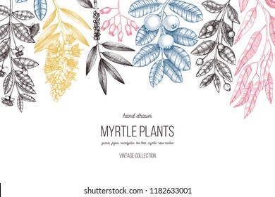 Botanical background with beautiful myrtle plants sketches. Hand drawn  Eucalyptus, tea tree, guava, myrtus drawings. Exotic trees design. Horisontal floral template.