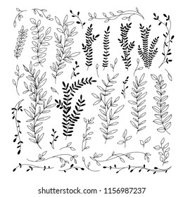 Botanical collection. Hand drawn branches and leaves. Vector design elements. Nature vector illustration.