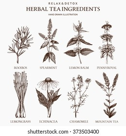Botanical collection of hand drawn herbal tea ingredients. Decorative vector set of vintage herbs sketch