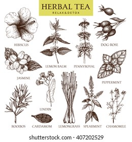 Botanical collection of hand drawn herbal tea ingredients. Decorative vector set of vintage medicinal herbs and spice sketch isolated on white.