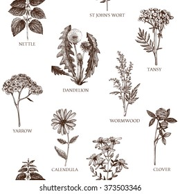 Botanical design with hand drawn spices and herbs. Decorative  background with vintage medicinal herbs sketch. Herbal seamless pattern isolated on white. Vector illustration