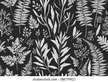 Botanical hand drawn illustration. Seamless pattern with plants, herbs, flowers and leaves. Vintage floral background. Vector allover print.