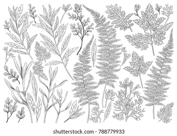 Botanical hand drawn illustration. Vintage floral set with plants, herbs, flowers and leaves. Vector design elements isolated on white background.