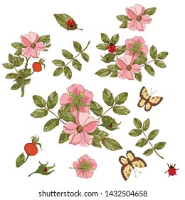Botanical illustration of the elements of fruits and flowers of rose hips, butterflies and ladybug