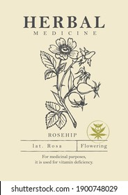 Botanical illustration of a hand-drawn rosehip plant in retro style. Vector banner or label for herbal medicine, green pharmacy or gardening. Medicinal herbs collection.