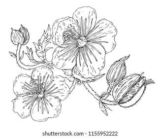 botanical illustration leaf