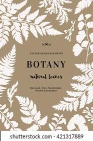 Botanical illustration with leaves. Boxwood, seeded eucalyptus, fern, maidenhair. Design elements. Vector. Silhouette.