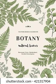 Botanical illustration with leaves. Boxwood, seeded eucalyptus, fern, maidenhair. Engraving style. Design elements. Vector.