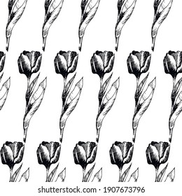 Botanical Illustration |Tulip Hand Drawing Pictures | Seamless Pattern | Floral | White Background