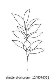 Botanical leaves. One line drawing art.  Abstract minimal plants