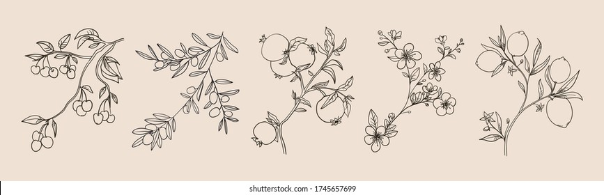 Botanical plant branches vector collection, retro image. Hand drawn curly plant twigs with flowers, leaves and fruits. Olive branch, lemons on a tree, pomegranate fruits in line style, design elements
