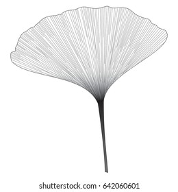 Botanical series Elegant Single Ginkgo leaf in sketch style in black and white on white background