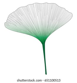 Botanical series Elegant Single Ginkgo leaf in sketch style in green gradient , black and white on white background