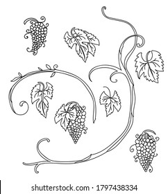 Botanical set with hand drawn line art grape stalk with fruit. Vector monochrome floral template illustration for wedding invitation,vegan cafe, flower shop logo, print, design, tattoo.