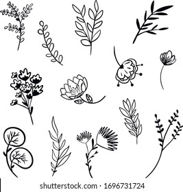 Botanical vector illustration. Graphic design elements for your logotype and identety
