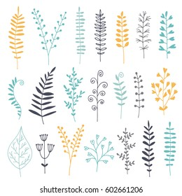 Botanical vector set, color illustration with drawn leaves, herbs and flowers, floral collection isolated on white background