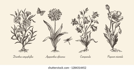 Botanical victorian illustration. Flower monochrome set. Engraved vintage style. Poppy, campanula, agapanthus and carnation. Vector isolated design on a white background.