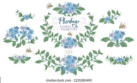Botany illustration of blue Plumbago flowers. Set of laurels and floral elements