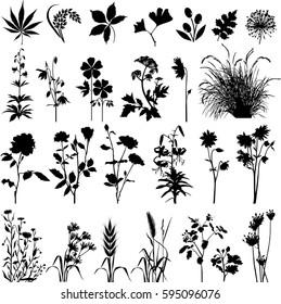 Botany plants