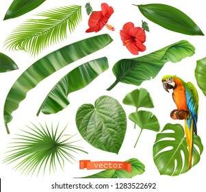 Botany. Set of leaves and flowers. Tropical plants. 3d realistic vector icons