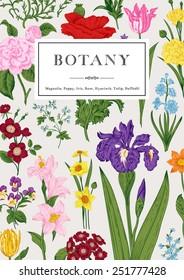 Botany. Vintage floral card. Vector illustration. Colorful flowers.