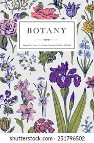 Botany. Vintage floral card. Vector illustration of style engravings. Colorful flowers with blue outline.