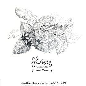 Botany. Vintage flowers. Black and white illustration in the style of engravings.