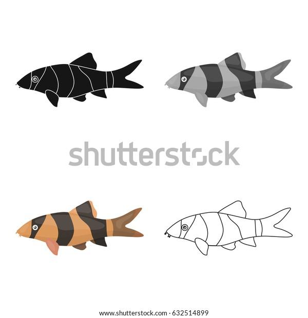 Botia clown (Botia macracantha) fish icon cartoon. Singe aquarium fish icon from the sea,ocean life cartoon.
