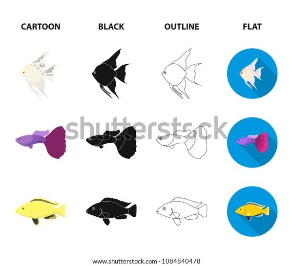 Botia, clown, piranha, cichlid, hummingbird, guppy,Fish set collection icons in cartoon,black,outline,flat style vector symbol stock illustration web.
