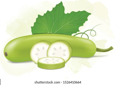bottle gourd vector illustration with green leaf and bottle gourd pieces