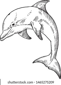 A bottlenose dolphin. Hand drawn vector illustration.