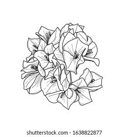 Bougainvillea flower drawing in ink illustration black and white