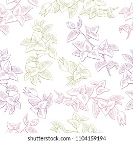 Bougainvillea flower graphic color seamless pattern background sketch illustration vector