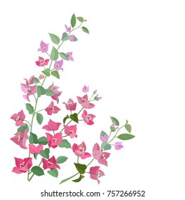 bougainvillea flowers isolate on white background. use for card