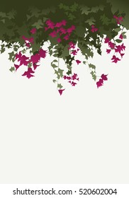 Bougainvillea flowers. Vector illustration isolated on white background.