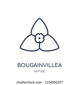 Bougainvillea icon. Bougainvillea linear symbol design from Nature collection. Simple outline element vector illustration on white background.