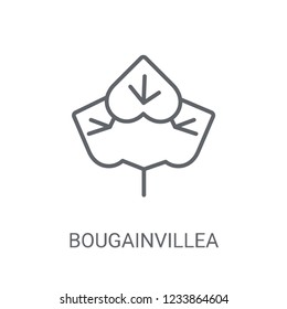 Bougainvillea icon. Trendy Bougainvillea logo concept on white background from Nature collection. Suitable for use on web apps, mobile apps and print media.