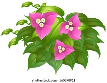 Bougainvillea in pink color illustration