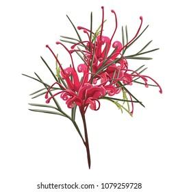 Bouquet of Australian Red Grevillea Native Plant