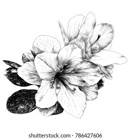 a bouquet of Azalea flowers sketch vector graphics monochrome drawing