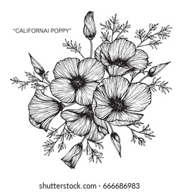 Bouquet of California poppy flowers drawing and sketch with line-art on white backgrounds.